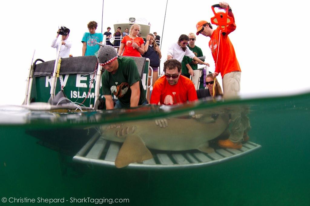 © Christine Shephard - SharkTagging.com